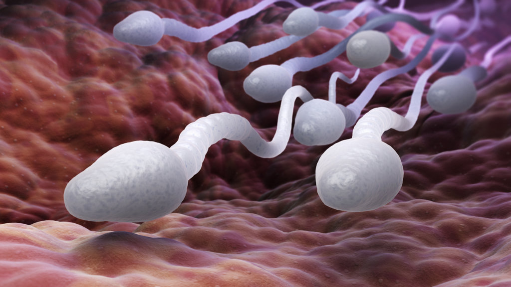 Researches say  dad protein intake decides offspring health