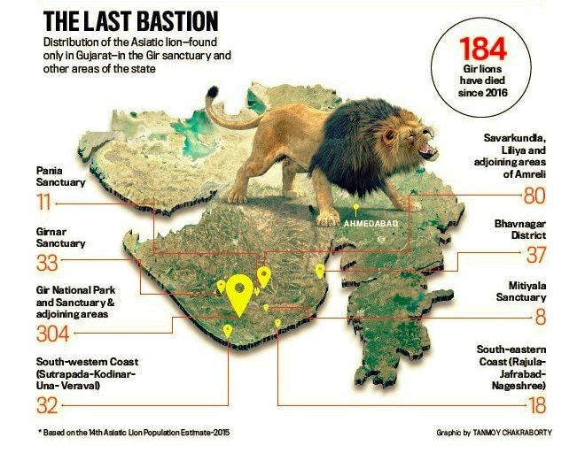 23 Gir lions dead in 10 days