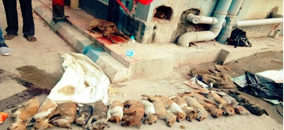 Two women beaten 16 puppies to  death  at Kolkata hospital  gruesome video goes viral