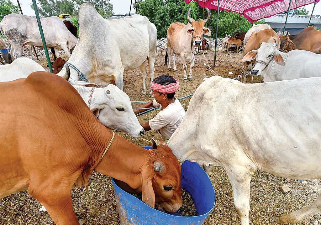Ministry of agriculture and farmers welfare to  look after Cow board with 750 Crores